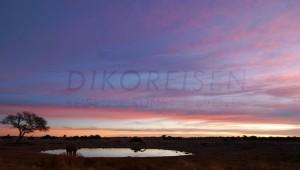 Namibia Rundreise Selbstfahrer Etosha Nationalpark Wasserloch am Abend