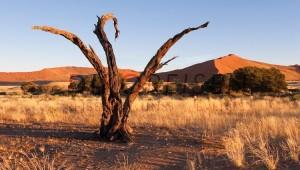 Namibia Rundreise Selbstfahrer Abgestorbene Bäume im Dead Vlei