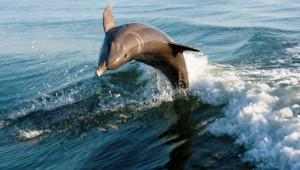 Florida Rundreise Delfine bei einem Bootsausflug in Florida hautnah erleben