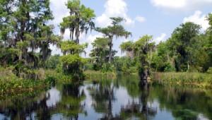 Florida Rundreise Everglades, Sümpfe und Alligatoren in Florida