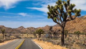 USA Busrundreise Westen Fahrt durch die Mojave Wüste mit Joshua Trees