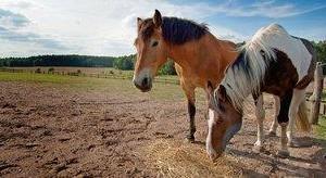 FUN CLUB Van der Valk Resort Linstow Pferdekoppel zum Reiten für Ausflüge