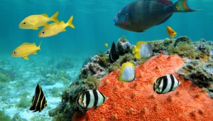 Dubai Seychellen Erlebnisreise