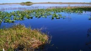 Rundreise Florida Everglades im Süden Floridas
