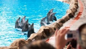 Rundreise Florida SeaWorld Freizeitpark in Orlando Delfinshow