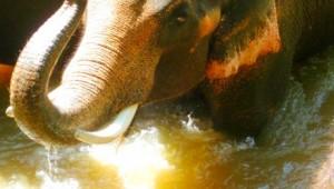 Thailand Rundreise Auf Ihrer Thailand Rundreise erleben Sie Elefanten hautnah