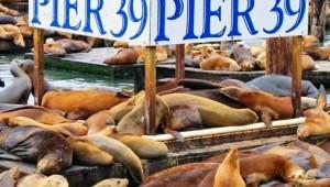West USA Rundreise Pier 39 in Los Angeles mit der bekannten Seelöwen-Kolonie