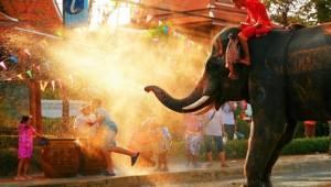 Thailand Rundreise Elefantendusche in Chiang Mai