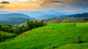 Thailand Rundreise Reisfelder im Norden Thailands in der Nähe von Chiang Mai