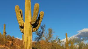 Rundreise Westküste USA - Phoenix
