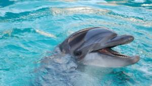 Florida Rundreise Delfin