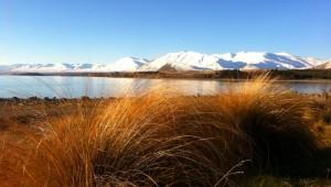 Reisebericht Neuseeland - Milford Sound Fjord Ufer