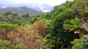 Reisebericht Neuseeland - Nordinsel 1