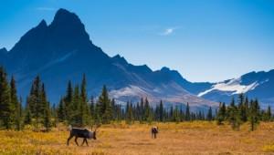 Busrundreise USA Westen - Jasper National Park Alberta - Parks Canada - Ryan Bray
