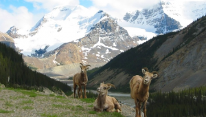 Busrundreise-USA-Westen-Banff-Nationalpark-Tiere-Travel-Alberta-1