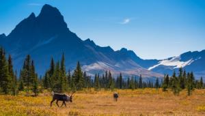 Busrundreise-USA-Westen-Jasper-National-Park-Alberta-Parks-Canada-Ryan-Bray-1