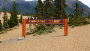 Yukon & Alaska Rundreise - Carcross Desert