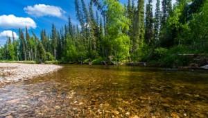 Yukon & Alaska Rundreise - Chena River