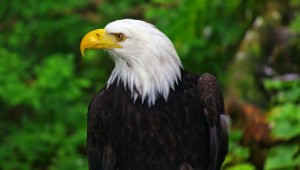 Yukon & Alaska Rundreise - Eagle - State of Alaska - Reinhard Pantke