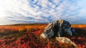 Yukon & Alaska Rundreise - Tundra im Denali Nationalpark