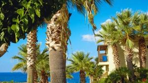 GRECOTEL Marine Palace & Suites - Palmen