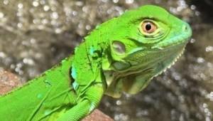 Costa Rica Reiseimpressionen - Animal