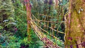 Costa Rica Reiseimpressionen - Brücke