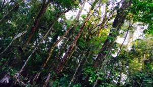 Costa Rica Reiseimpressionen - Dschungel